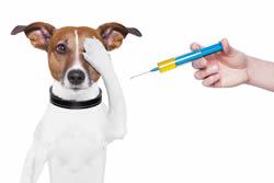 dog_vaccination_250